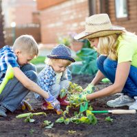 Mother and her sons children planting strawberry in home garden